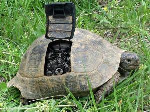engine turtle