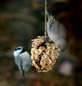 pine cone feeder