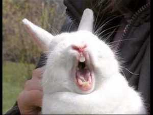 screaming bunny