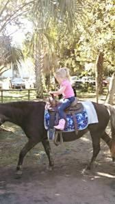 alma horse