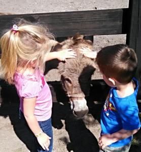 ebola donkeys