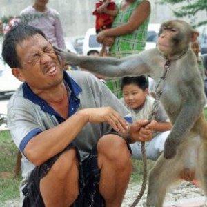 monkey slap1